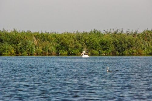 5 Days, Danube Delta