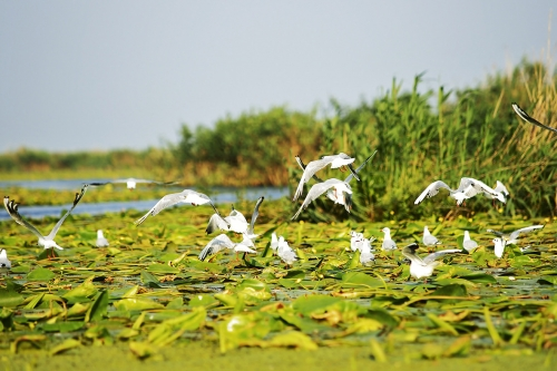 5 Days, Danube Delta