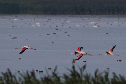 4 Days, Danube Delta